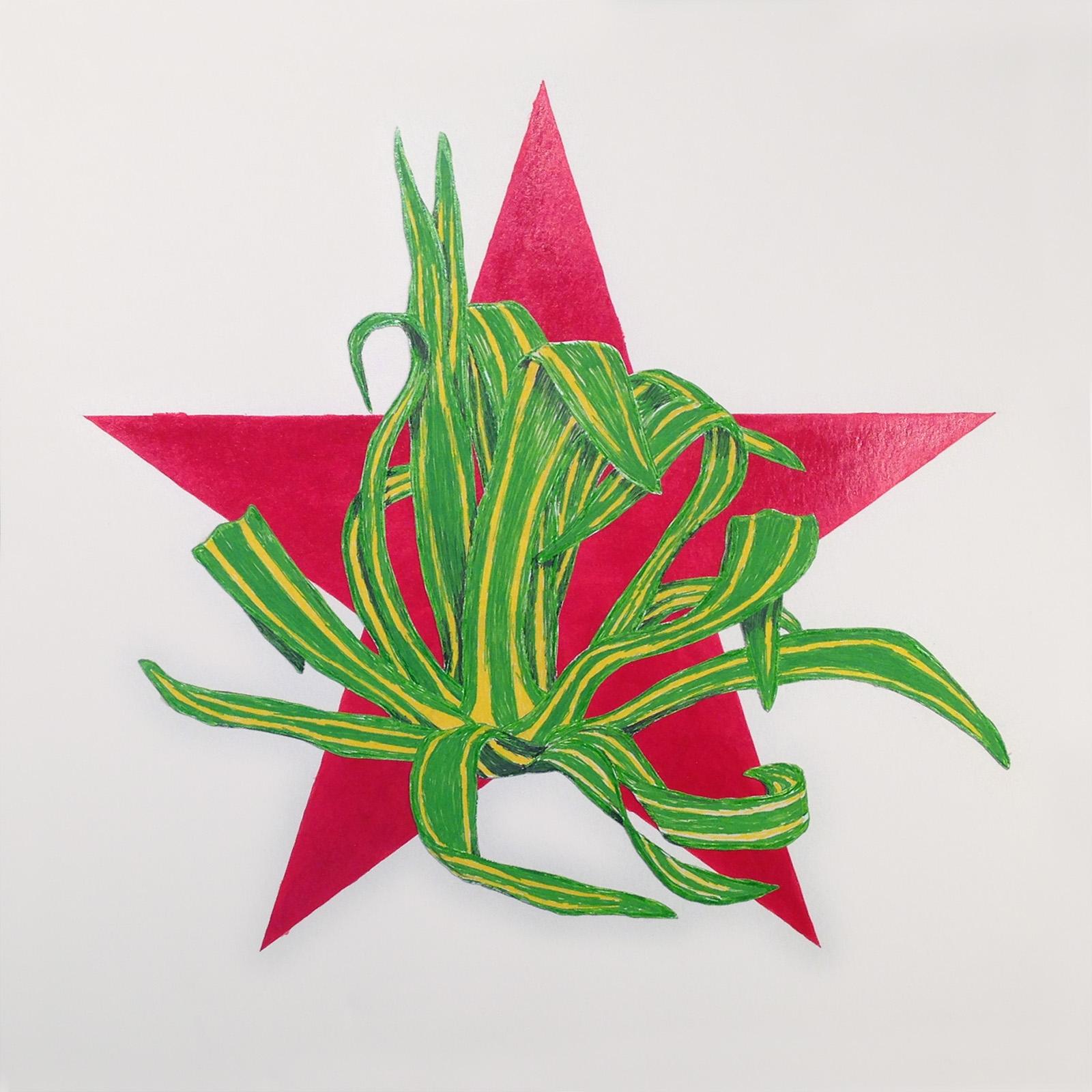 Agave Star